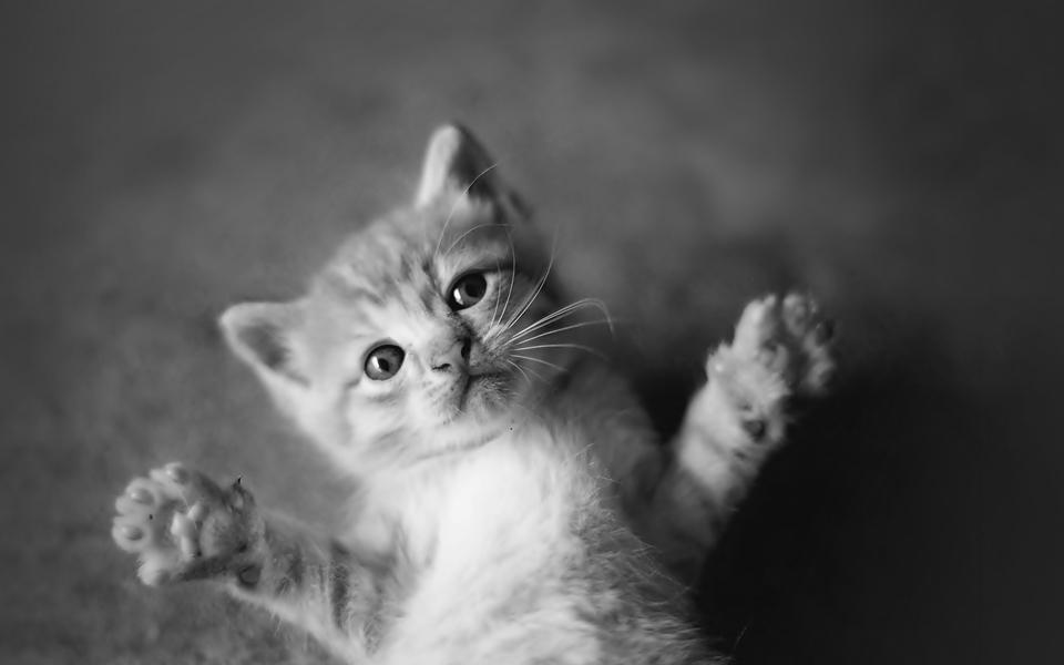 可爱动物壁纸大全 第8页-zol桌面壁纸