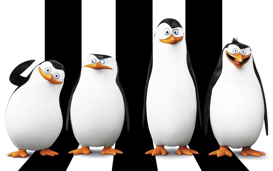 马达加斯加的企鹅高清壁纸