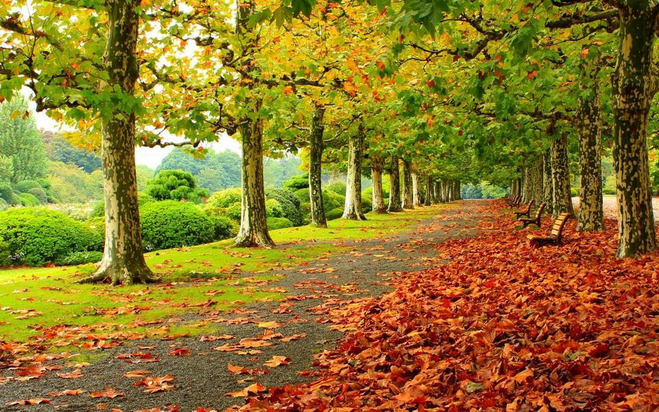 林荫大道自然景色壁纸图片