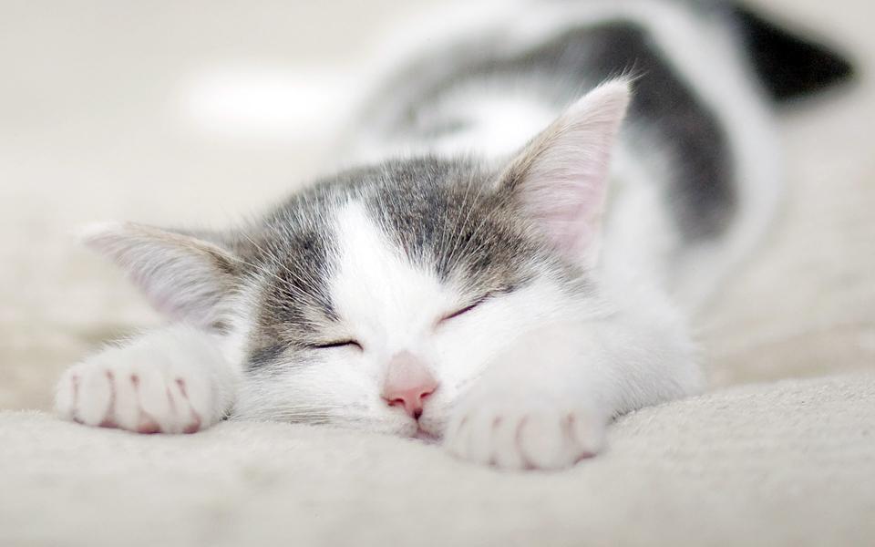 笔记本壁纸 萌猫壁纸 可爱的小猫壁纸桌面下载