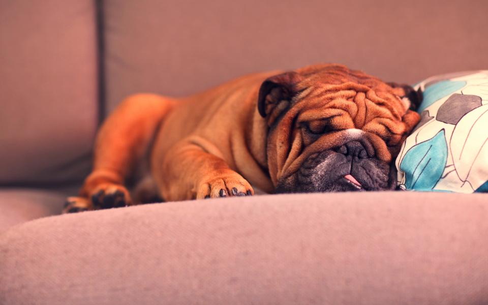 可爱狗狗壁纸下载-zol桌面壁纸
