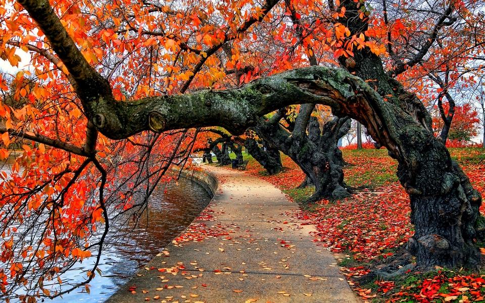 森林风景桌面图片