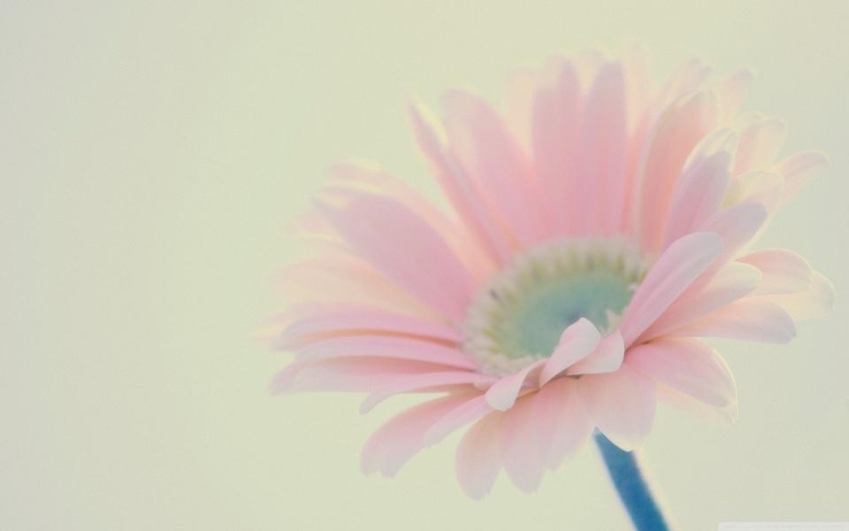 电脑壁纸 唯美意境壁纸 清新唯美花卉壁纸下载下载   (1/12) 小箭头