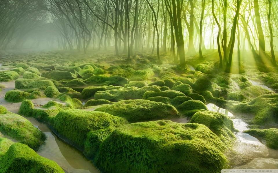 电脑壁纸 自然风景壁纸 绿色护眼经典桌面壁纸下载   (1/10) 小箭头
