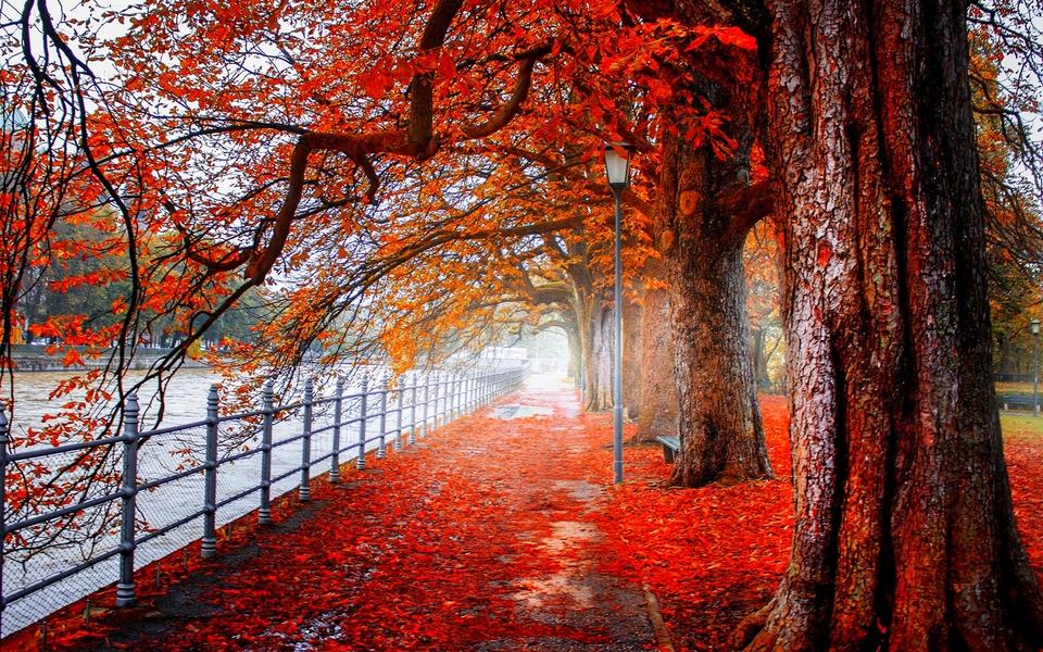 电脑壁纸 自然风景壁纸 森林风景桌面图片下载