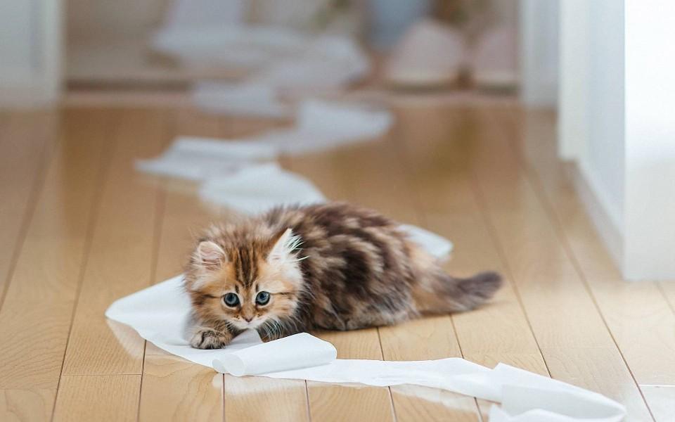 笔记本壁纸 萌猫壁纸 可爱的小猫高清壁纸下载   (5/20) 小箭头图标亲