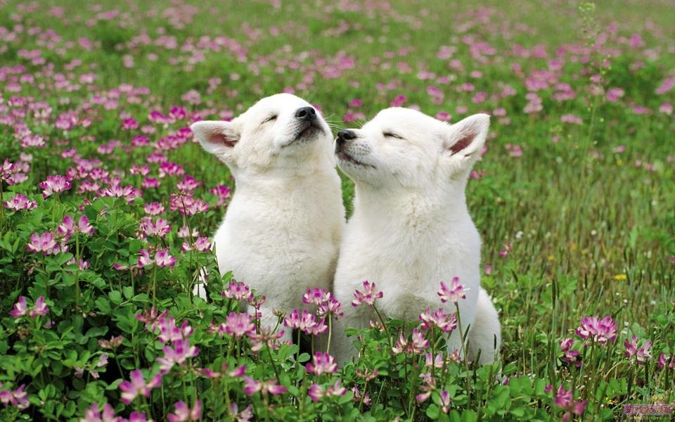 可爱动物高清墙纸