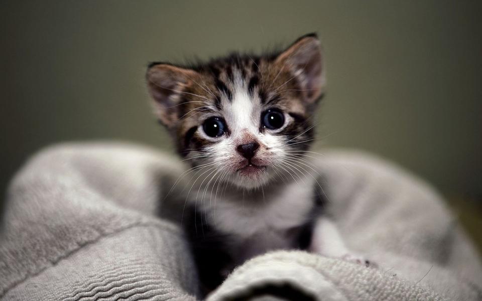 萌猫高清壁纸图片图片