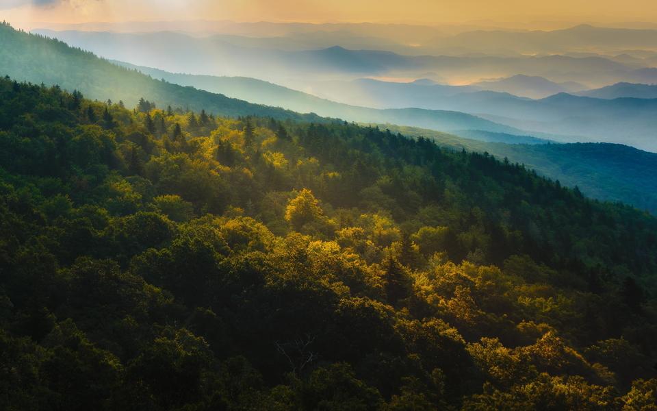 唯美森林景色壁纸桌面