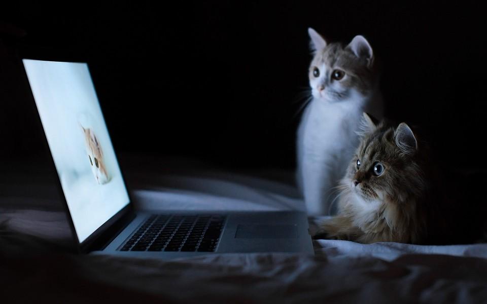 可爱猫咪电脑桌面壁纸