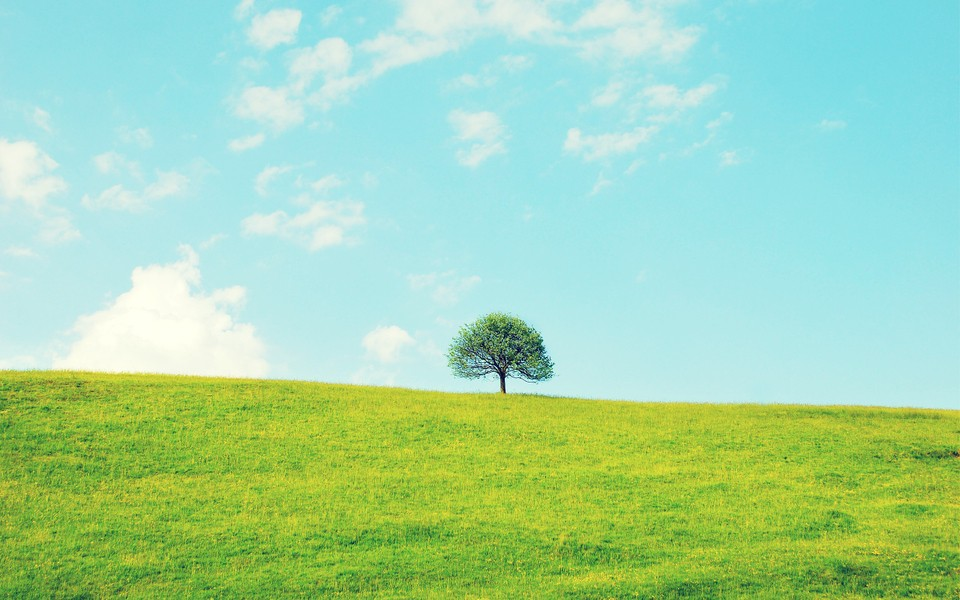 唯美優雅的風景壁紙
