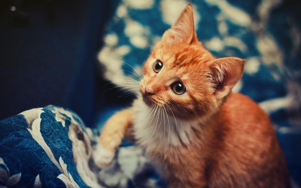 笔记本壁纸 萌猫壁纸 可爱的猫咪高清壁纸下载   (6/10) 小箭头图标亲