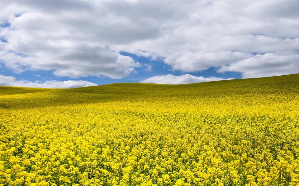 笔记本壁纸 自然风景壁纸 美丽的田园风光电脑桌面壁纸下载   (5/12)