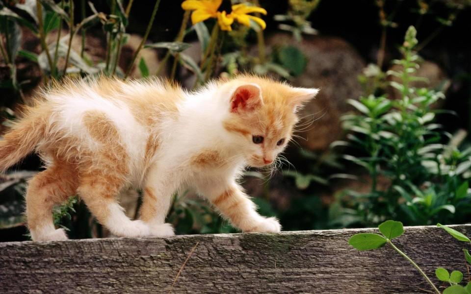 壁纸 动物 猫 猫咪 小猫 桌面 960_600