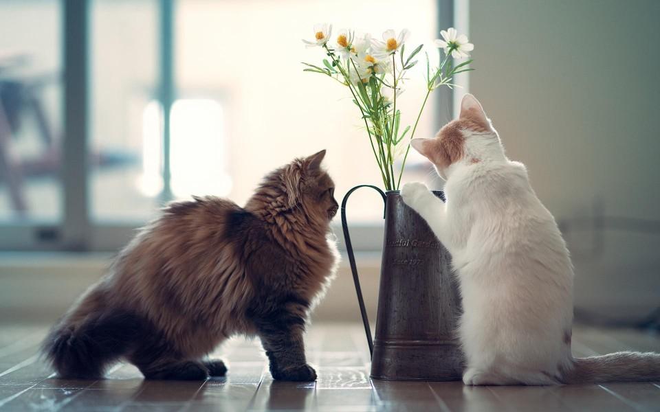 可爱小花猫高清桌面壁纸