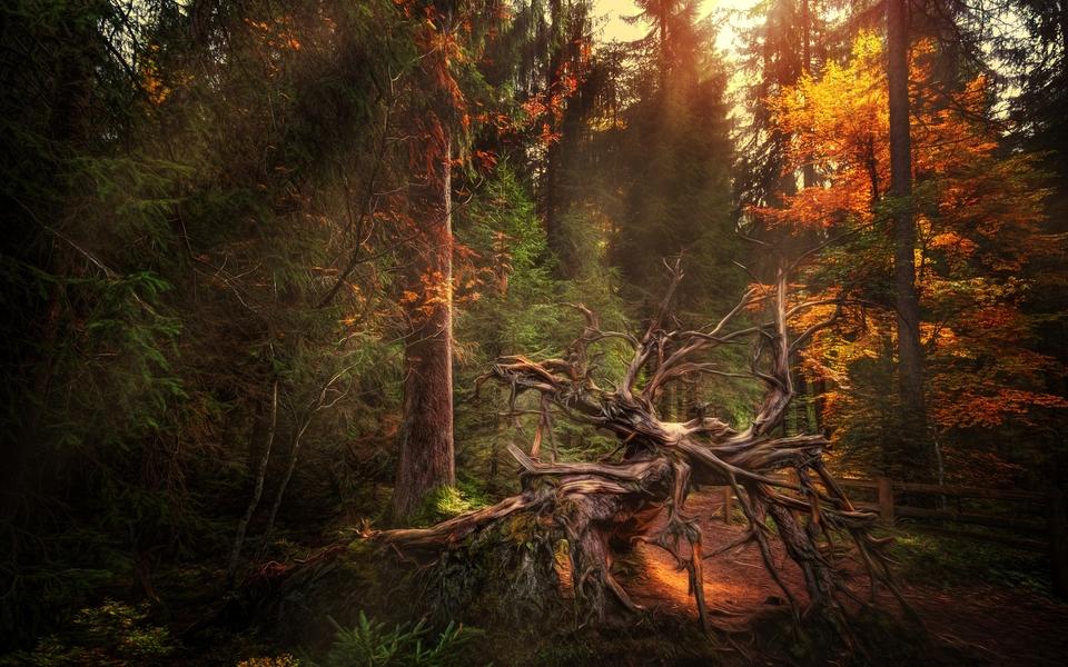 电脑壁纸 唯美意境壁纸 森林美景唯美桌面下载