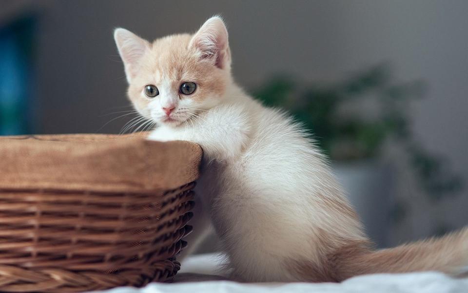 萌猫桌面高清壁纸下载