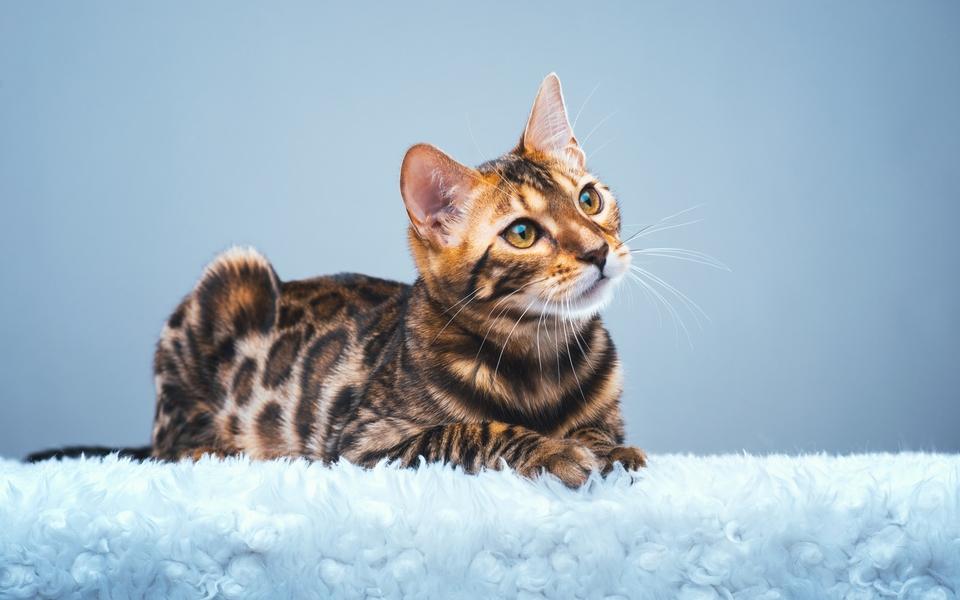 电脑壁纸 动物壁纸 可爱萌猫桌面壁纸图集下载