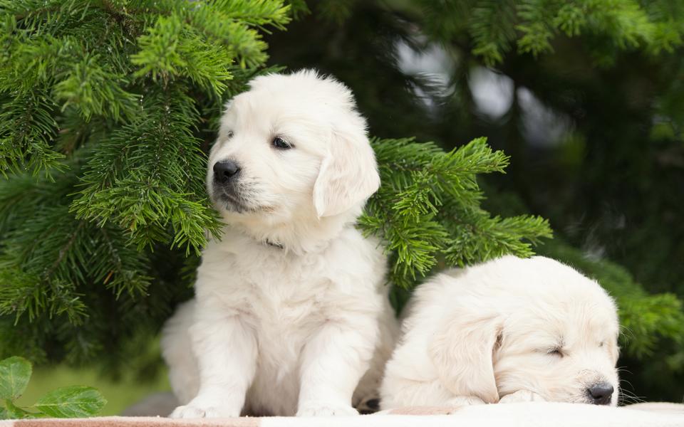 可爱狗宝宝高清桌面壁纸