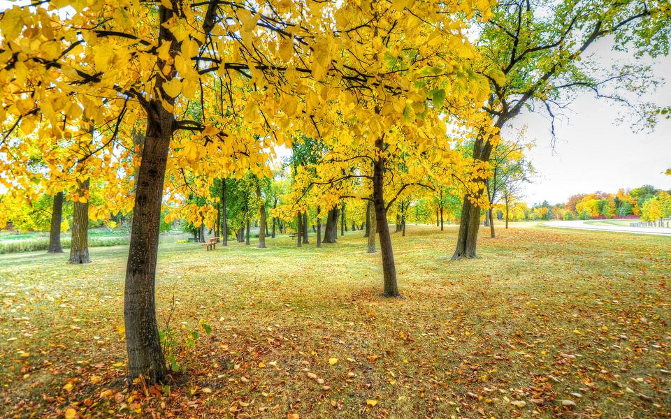 笔记本壁纸 唯美意境壁纸 森林景色唯美壁纸下载