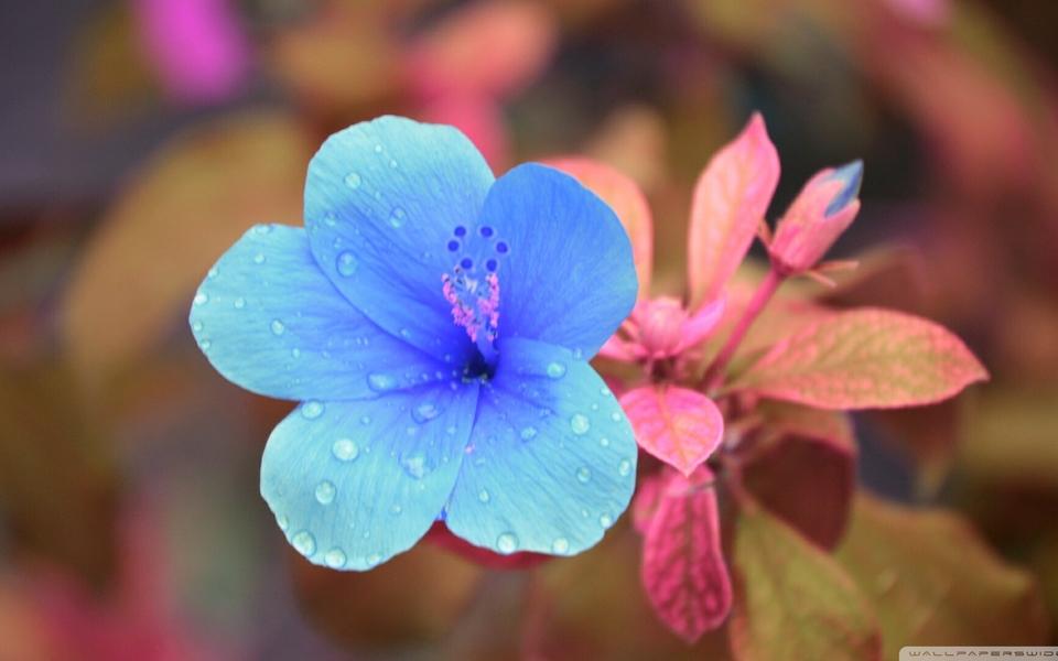 笔记本壁纸 植物壁纸 唯美花卉锁屏壁纸下载   (3/9) 小箭头图标亲~快