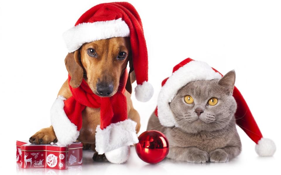 圣诞节可爱动物电脑壁纸