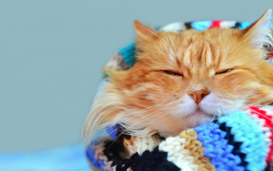 小猫猫可爱卖萌壁纸