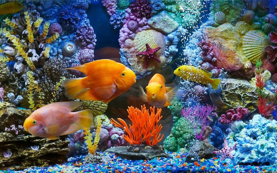 最可爱的海底动物