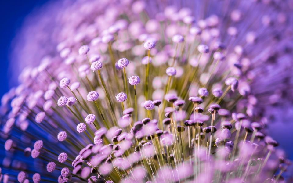 笔记本壁纸 植物壁纸 电脑桌面壁纸花卉下载   (3/10) 小箭头图标亲图片