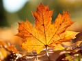 秋天的落叶桌面壁纸