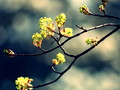 唯美植物写真精高清桌面壁纸