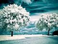 冰雪世界唯美壁纸图片