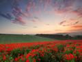 花海唯美景色植物壁纸