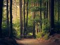 森林美景唯美桌面