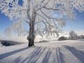 雪中的大树高清桌面壁纸