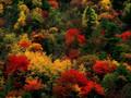 秋天的红叶美景桌面壁纸