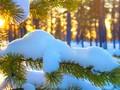 雪景冬季唯美风景壁纸