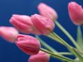 缤纷花卉写真桌面壁纸