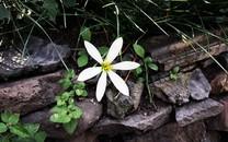 自制花卉风景壁纸