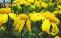花卉主题壁纸下载