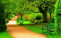 森林公园风景壁纸