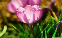 粉色的花卉唯美壁纸