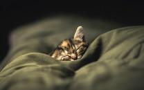 猫星人卖萌高清壁纸