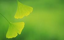 高清晰树叶摄影特写宽屏壁纸