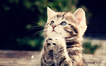 萌猫高清壁纸