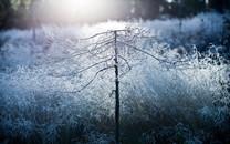 冬季简约自然高清壁纸