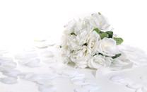 清纯白玫瑰与黄玫瑰
