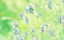 清新花卉小花们壁纸