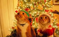 圣诞节可爱猫咪壁纸