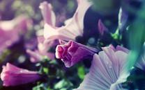 win8唯美梦幻花园植物唯美桌面壁纸
